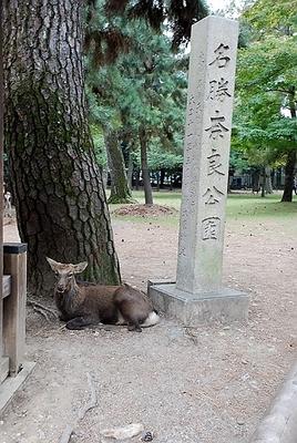 091025奈良公園.jpg