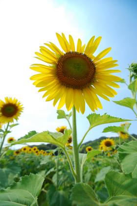 100725_真夏の太陽.JPG
