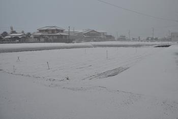 120219_裏の畑.jpg